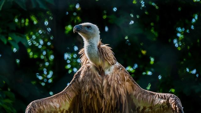 Vulture, Griffon Vulture, Zoo, Zoo Photography, Warm