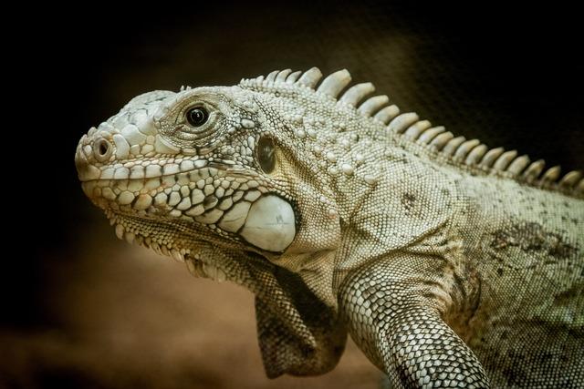 Lizard, Reptile, Animal, Zoo