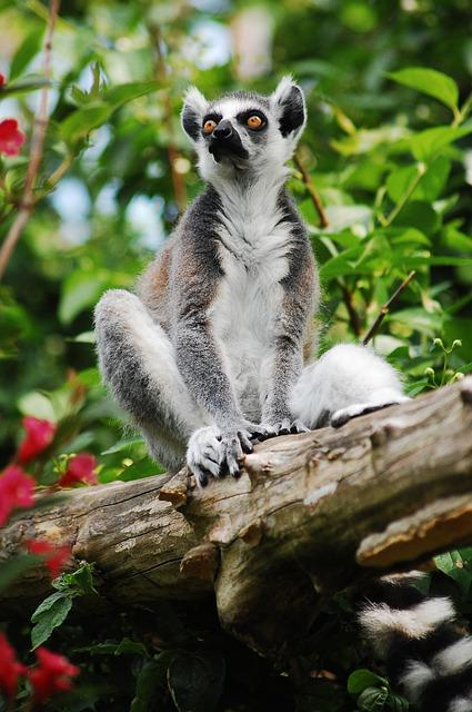 Lemur, Sitting, Zoo, Clear, Zoological Garden, Animal