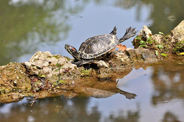 Frog, Turtle, Stones, Water, Reflection, Zoo