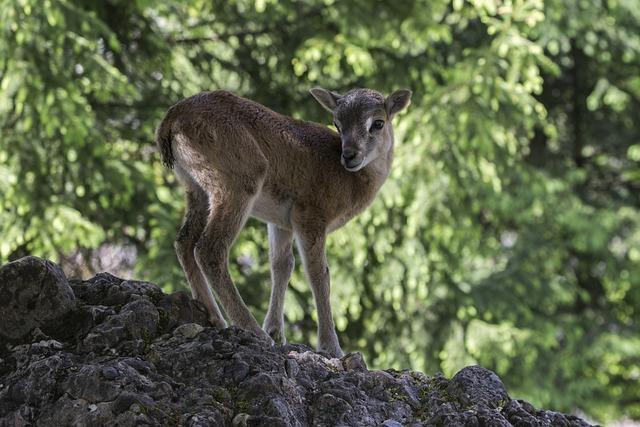 Roe Deer, Red Deer, Zoo, Wildlife Park, Nature, Wild