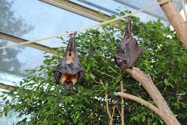 Zoo, Wilhelma, Flying Foxes, Sleeping