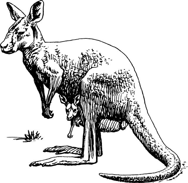 Kangaroo, Marsupial, Animal, Biology, Zoology