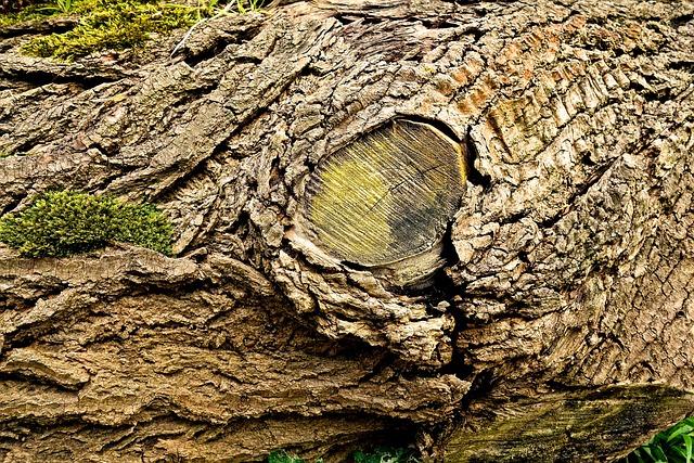 Humping A Fallen Tree Trunk Free Video