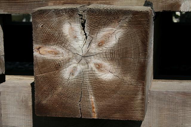 Wood, Stump, Prism, Sample, Pattern, évgyűrűk, Buildup