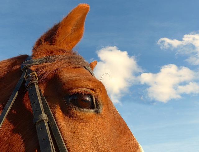 Horse, Portrait, œil, Animal, Mammal, Equine