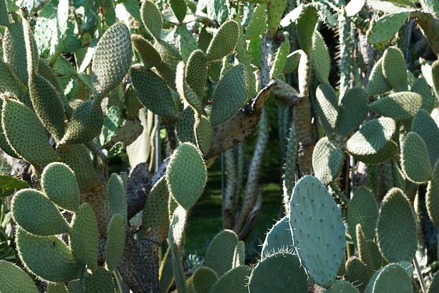 Cactus, Botanical Garden, überlingen, Lake Constance